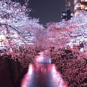 中目黒、目黒川の夜桜ライトアップ