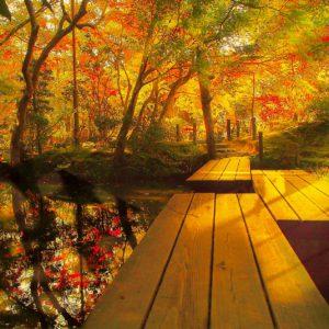 京都旅行、紅葉